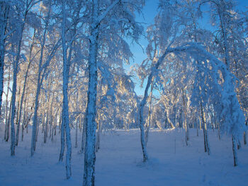 Kiruna Snow Festival